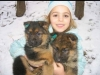 German Shepherds Puppies 1