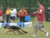 German Shepherds Puppies 12